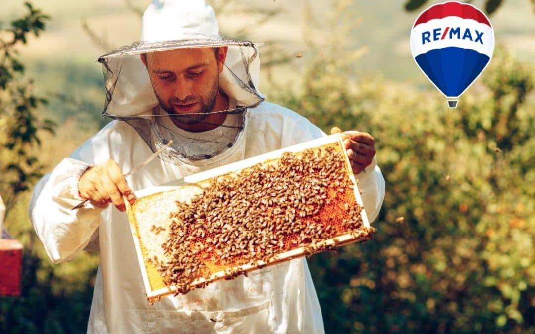 Bienen vor Gericht – Hobby-Imker werden
